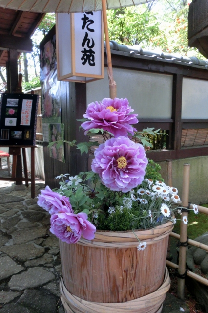 上野東照宮 春のぼたん祭