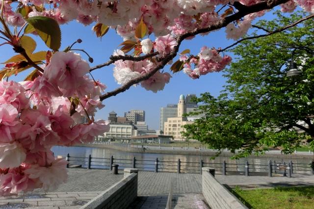 横浜税関と神奈川県庁