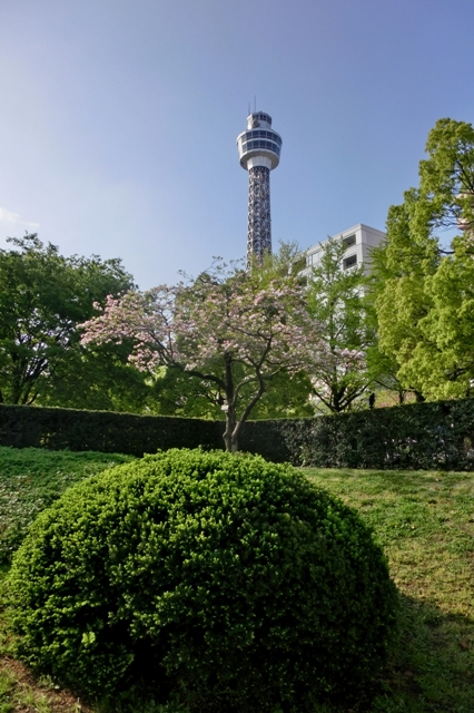 横浜マリンタワーとアメリカハナミズキ