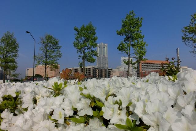 新港パークから見た横浜ランドマークタワー