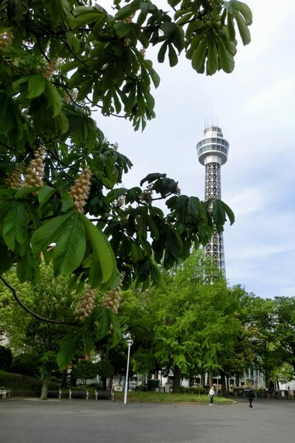 セイヨウトチノキと横浜マリンタワー