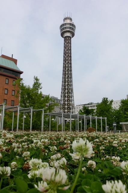 シロツメグサと横浜マリンタワー