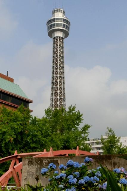 アジサイと横浜マリンタワー