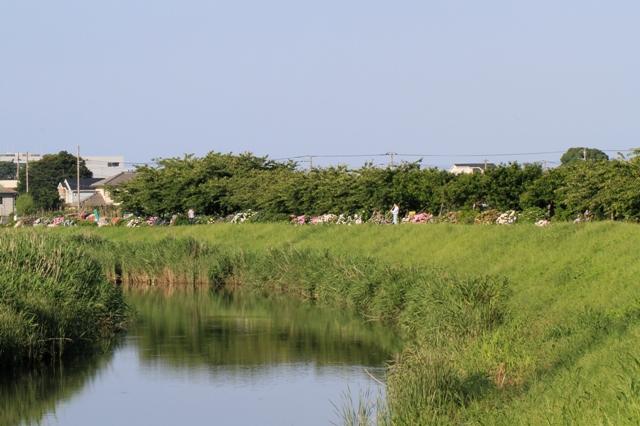 田園地帯を流れる小出川
