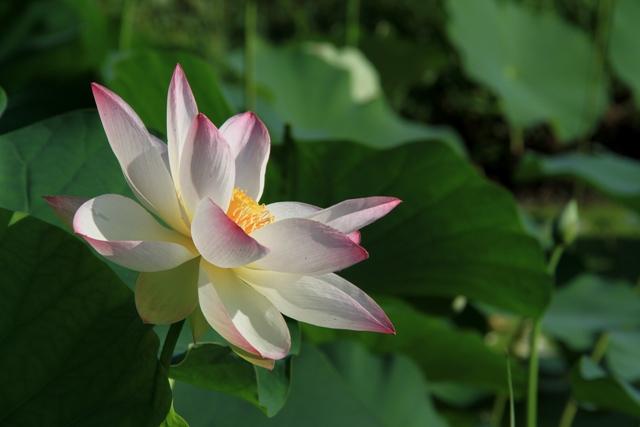ほんのり爪先ピンク咲き(別の角度から)