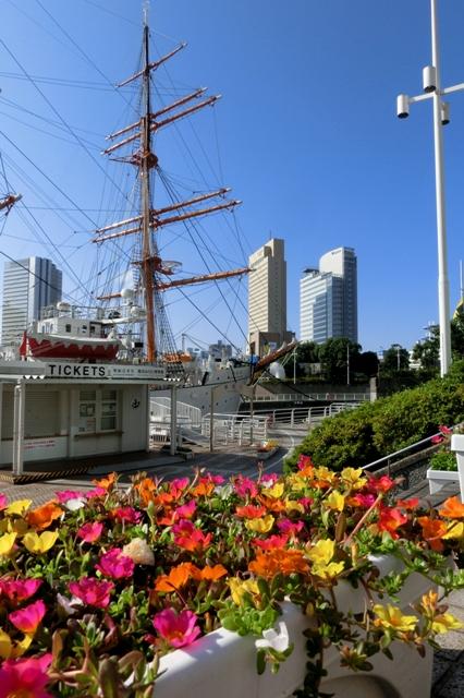 帆船日本丸とポーチュラカ