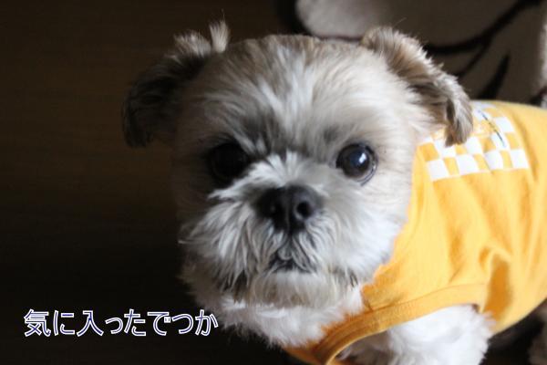 ・搾シ祢MG_0842_convert_20140502235010
