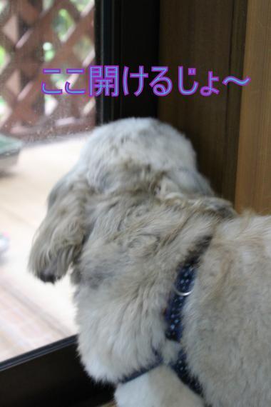 ・露MG_2505_convert_20140812003133