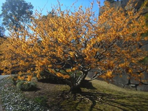 皇居東御苑で春を感じる
