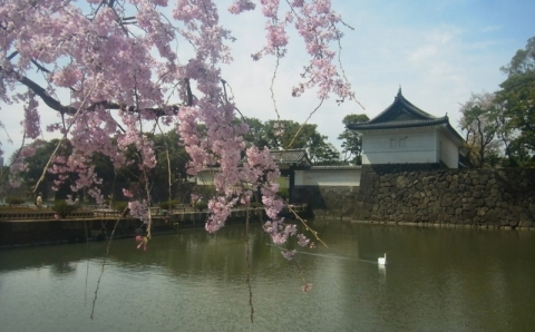 桜、カタクリ、すみれの春