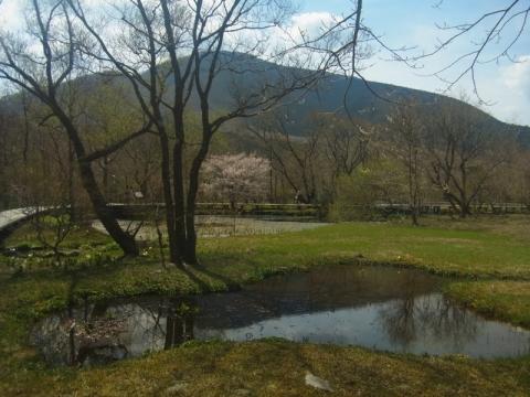 箱根湿生花園で春を実感