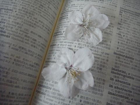 今年も辞書に桜を追加