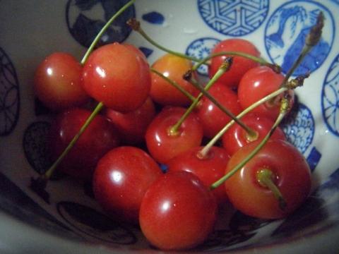 さくらんぼの季節です