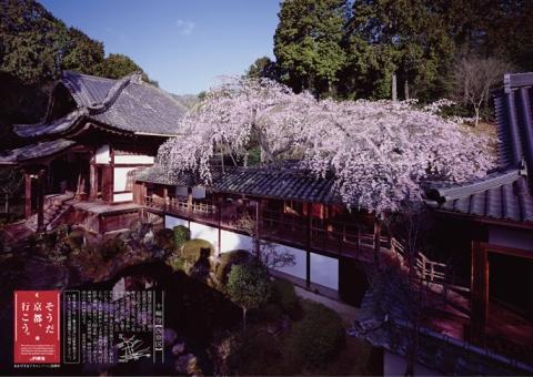 1年前の春の「そうだ 京都、行こう。」