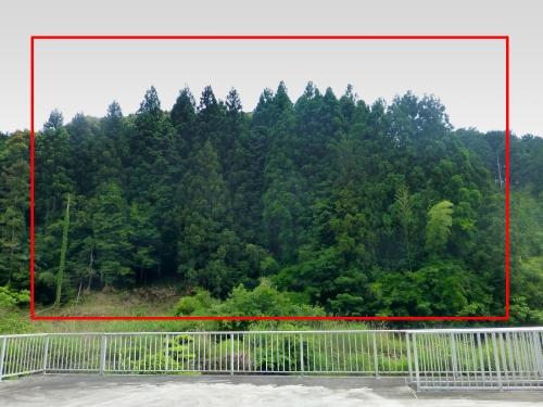 05_私の杉林