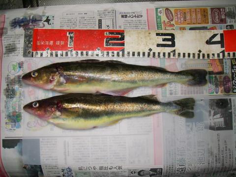 厚賀漁港(コマイ 07[2].02.03).jpg
