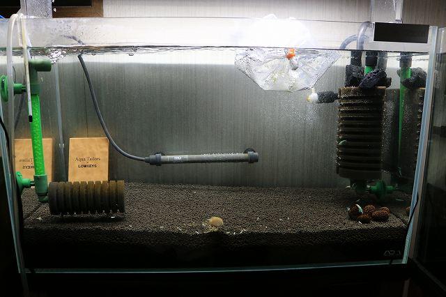 ターコイズ水槽