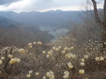 頂上からの丹沢湖