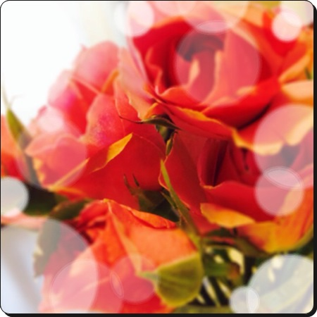20140607 1お花