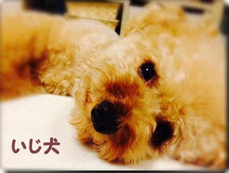 20140607 5いじ犬