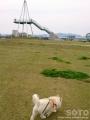 氷見(芝生公園)