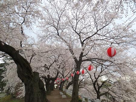 013満開の桜