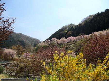047山里の春、