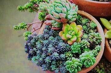 4ポット鉢寄せ植え