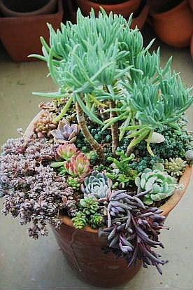 大長鉢寄せ植え