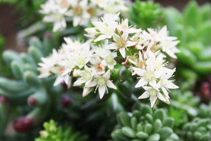 グリーンペットの花