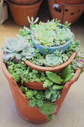 割れ鉢 寄せ植え