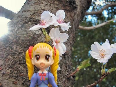 桜2014 001