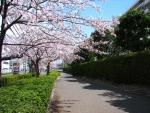 桜2014 002