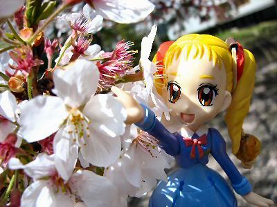 桜2014 009