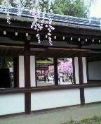 さくらの京菓子司への道-2013040213080000.jpg