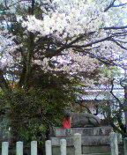 さくらの京菓子司への道-2013040316190001.jpg