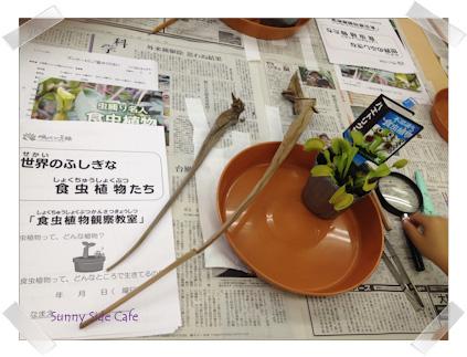 shokuchuushokubutsu1.jpg