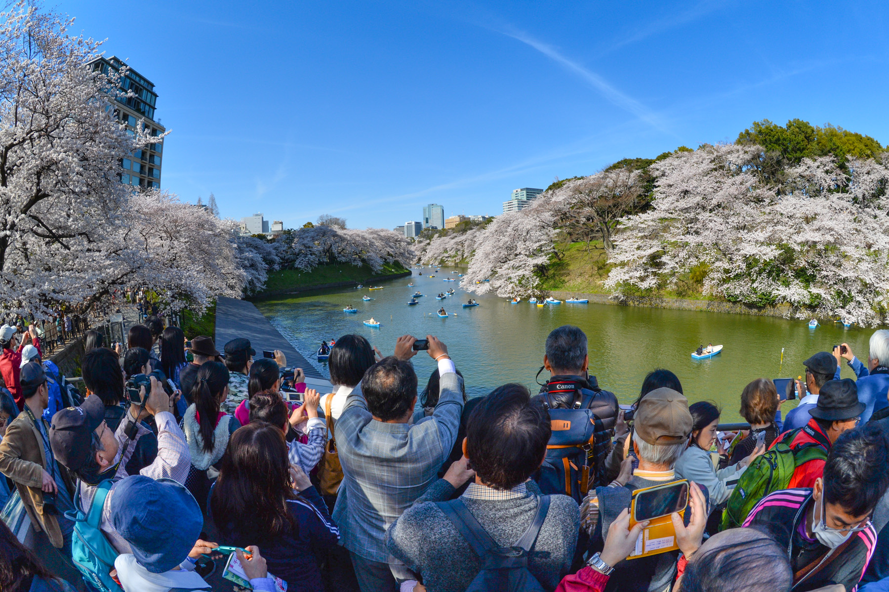 「千鳥ヶ淵の桜 混雑 フリー写真」の画像検索結果