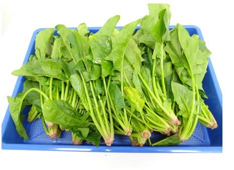 野菜乾燥機 ほうれん草