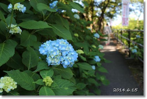20140615g-1.jpg