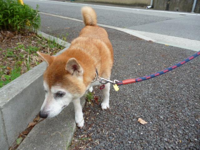 日曜日のお散歩でクンクン☆.。.:*・°☆.。.:*・°☆..。.:*・