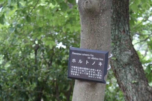 大泉緑地00023