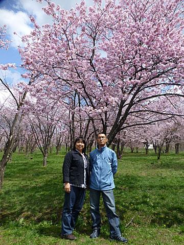 14 5/6 桜 はったんと
