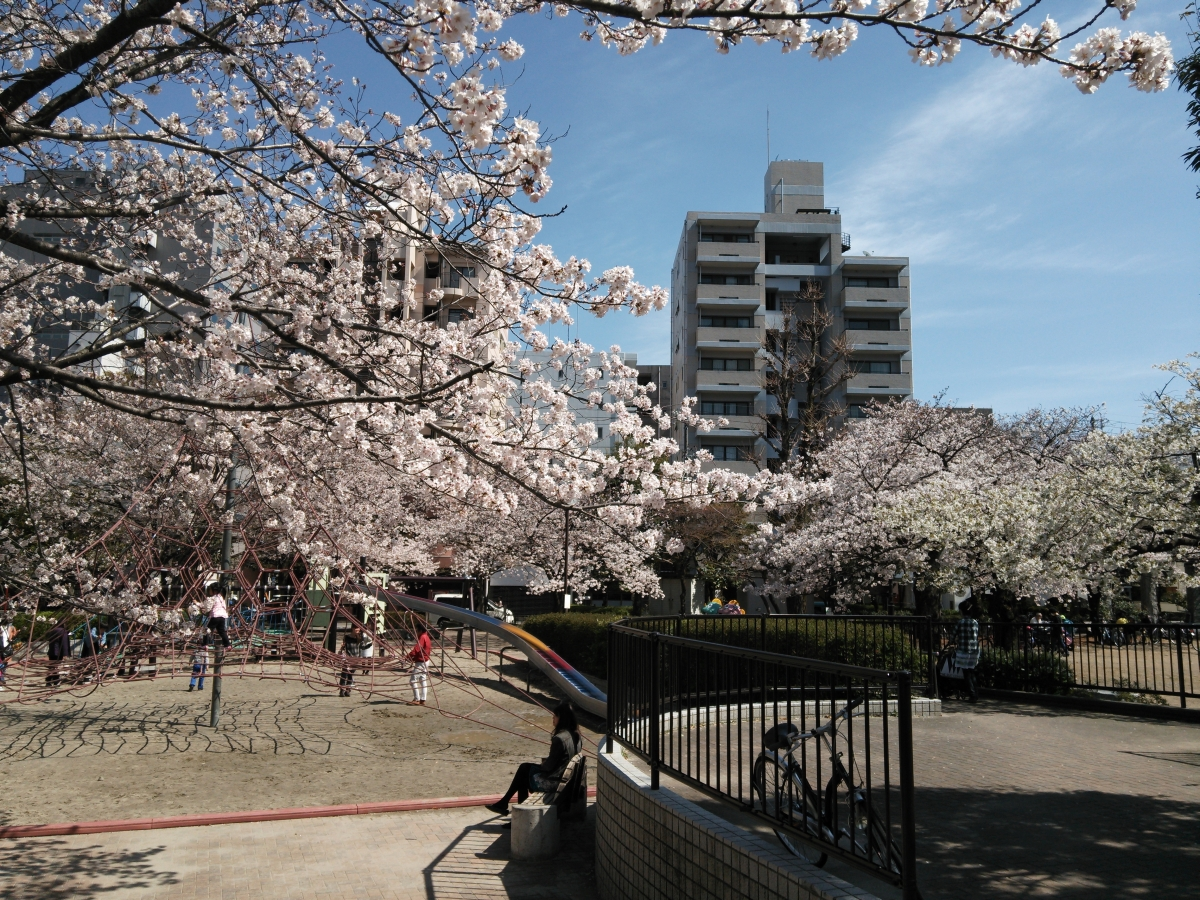 (140406) 桜3