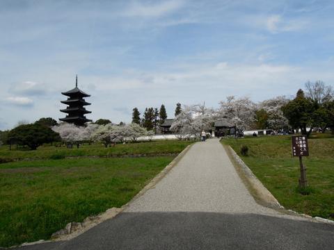 DSCN8486コンデジ国分寺