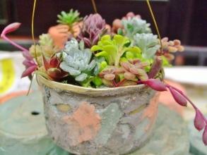 リメ缶に寄せ植え~♪センペル、セダム、玉葉、紫月、白雪ミセバヤとかとか~(^◇^)盛り過ぎ~♪2014.03.02