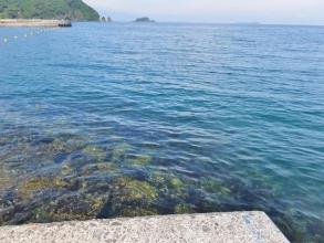 伊豆半島東部~こんなきれいな海で泳いだり釣りしたりするようになりました\(^o^)/2014.09.03早朝
