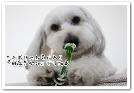 IMG_0917.jpg