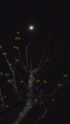 2014-03-08-moon.jpg