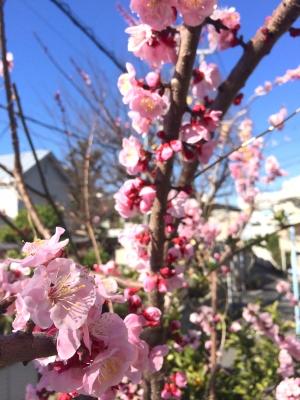 2014-03-22-flower.jpg